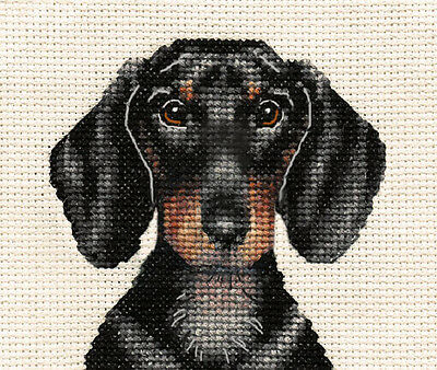 DACHSHUND dog, puppy ~ Full counted cross stitch kit ~ all materials supplied