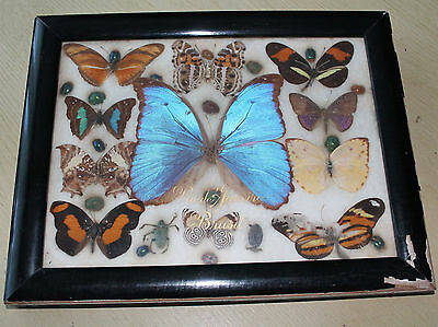 real butterflies vintage framed butterfly bug collection elizabeth riode janeiro