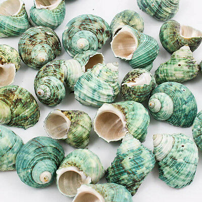 Green TAPESTRY TURBAN SEA SHELL Size M Craft DIY Drilled Hole Bead Jewelry A1321