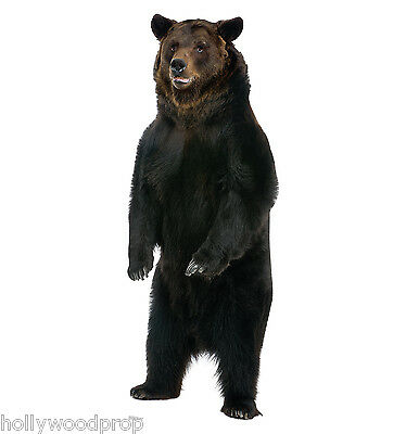 Brown Bear Lifesize Cardboard Standup Standee Cutout Poster Figure Grizzly
