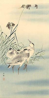 Japanese Reproduction Woodblock Print 13 Ohara Koson on Cream Parchment Paper.
