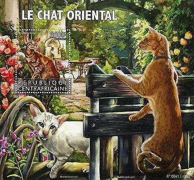Central African Republic 2015 MNH Oriental Cats 1v S/S Pets Oriental Shorthair