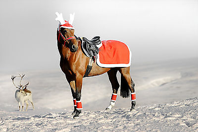 SALE! Horse & Rider Christmas/Xmas Dress Up Fancy Dress Riding Hat Cover & Rug