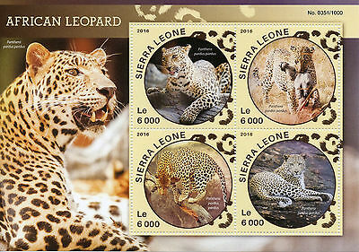 Sierra Leone 2016 MNH African Leopard 4v M/S Animals Big Cats Leopards Stamps