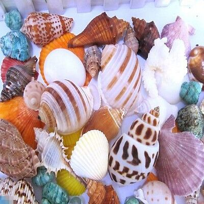 Mixed Beach Craft Shells Aquarium Ornamental Sea Approx 100g Decor