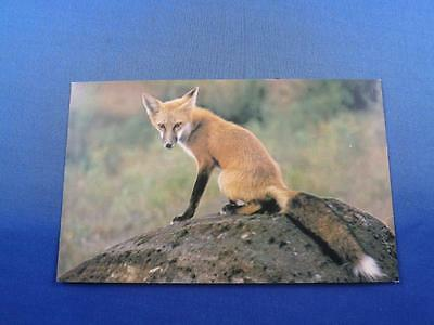 Goulet Service Station Postcard Canada Restaurant Esso Products Red Fox