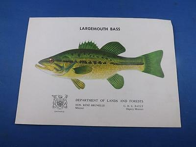 Largemouth Bass Information Booklet Department Lands And Forests Ontario Fish