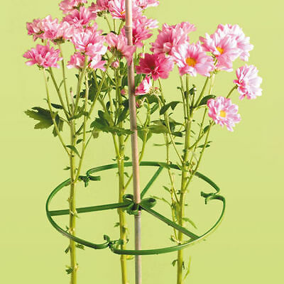 25 X 10 INCH ( 25cm ) PLANT/ FLOWER SUPPORT RING FOR BAMBOO CANES