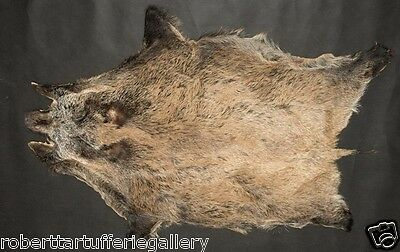 Fine european wild boar skin fur rug hide collectible hunting fireplace
