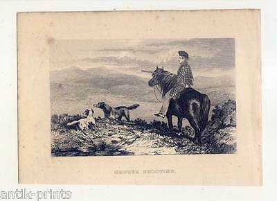 Grouse Shooting-Vogel-Jagd-Hunde-Setter-Pointer-Pferde-Pony - Stahlstich 1850