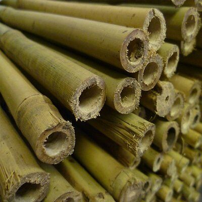 50 x Strong Heavy Duty Bamboo Can Plant Super Support Garden Canes 3,4,5,6,7Ft