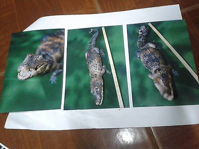 2010 photography crocodile stuffed