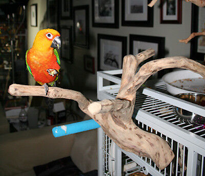Parrot Perch Bird Perch Natural Wood Multi Branch for Small to Medium