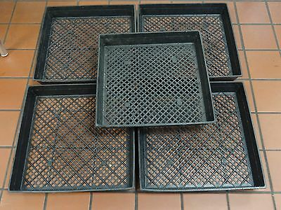 """3 Pack of Large 17"""" x 17"""" Planting Tray w/ Drainage Holes for Wheatgrass Sprouts"""