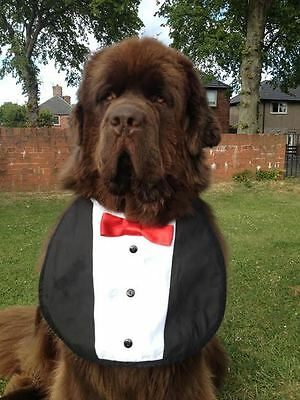 Big Dog Newfoundland St Bernard Bernese Newfoundland Tuxedo Bib Great Fun