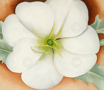 The White Calico Flower 1931 by Georgia O/'Keeffe Art Print Floral Poster 29x34