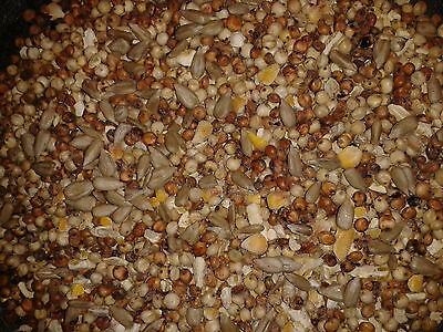 20kg No Wheat Wild Bird Food with Sunflower hearts - Feed - Mix