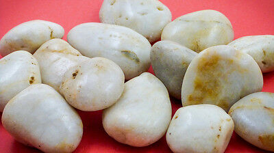 Large White Polished Stones 1Kg Natural Products