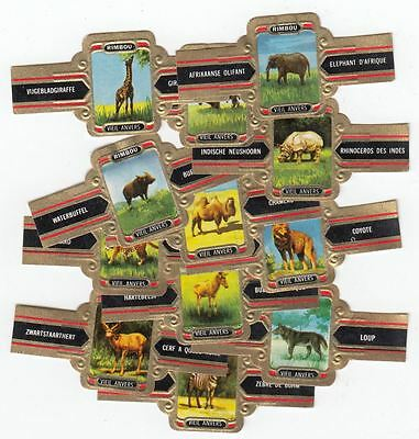 12 cigar bands Rimbou Different Wild Animals Wilde Elephant  iss in