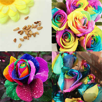 100X Seeds Colorful Rainbow Rose Valentine Lover Flower Seeds Garden Plant Decor