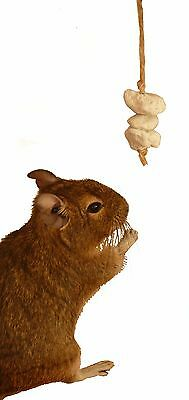 Pumice on a string - Small Pet pumice chew for Degu's Rats Hamsters Chinchillas