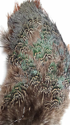"""RINGNECK PHEASANT RUMP PATCH  """" NATURAL"""" very nice  FLY TYING"""