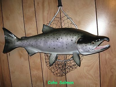 "Coho Salmon Taxidermy Quality 26"" Wall Mount"