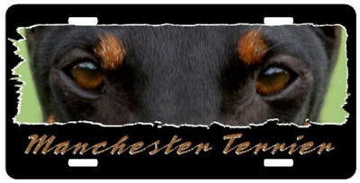 "Manchester Terrier  "" The Eyes Have It ""  License Plate"