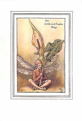 Flower Fairy.1923.Botanical.Lords-and-ladies.Cicely Mary Barker.Antique