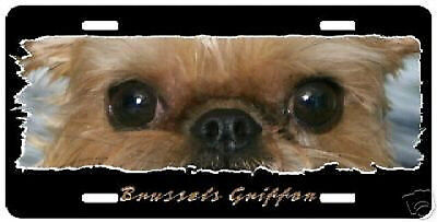 "Brussels Griffon #3  "" The Eyes Have It "" License Plate"