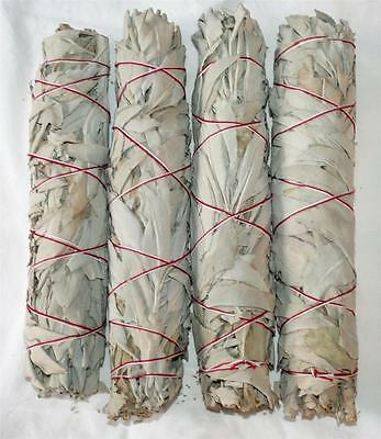 CALIFORNIA WHITE SAGE for Smudging Organic Burning Herb 4 BUNDLES 8 - 9 ""