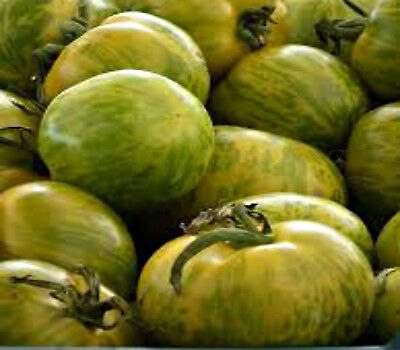 TOMATO SEEDS Green Zebra 25 seeds HEIRLOOM NON GMO HIGH YIELD