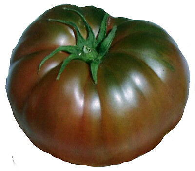 TOMATO SEEDS BLACK KRIM 25 seeds HEIRLOOM Tomato  NON GMO HIGH YIELD