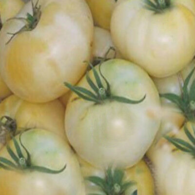 TOMATO SEEDS White Beauty 25 seeds sweet flavour Tomato  NON GMO HIGH YIELD