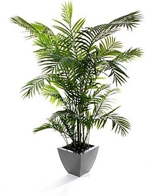 Closer To Nature 6 Ft 6-Inch Areca Palm Tree - Green