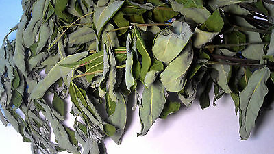 BLACK INDIAN HEMP (Apocynum cannabinum): Dry Leaf and Stem Botanical - 2 OUNCE