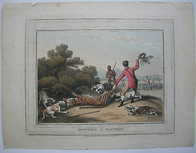 Hunting a Panther kolor Orig Lithografie Dubourg Howitt Pantherjagd 1850