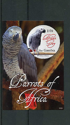 Gambia 2011 MNH Parrots of Africa 1v S/S I Birds African Grey Parrot Stamps