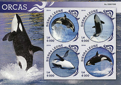 Sierra Leone 2016 MNH Orcas 4v M/S Marine Animals Whales Killer Whale Stamps