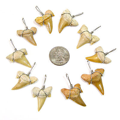 10 Pcs XL Wire Wrapped Fossil Shark Tooth Pendants Great Sharks Teeth Necklaces