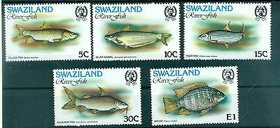 Poissons - River Fishes Swaziland 1980