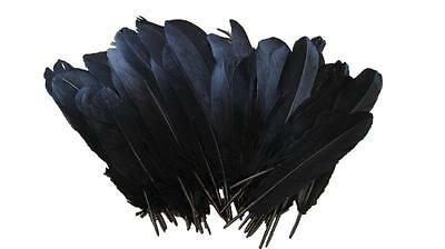 NEW 30 Black Craft Quills 15cm to 20cm Indian Wedding Feathers