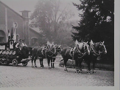 5 x 7 PHOTO - WURZBURGER HOFBRAU'S FOUR-HORSE WESTPHALIAN? DRAFT HITCH