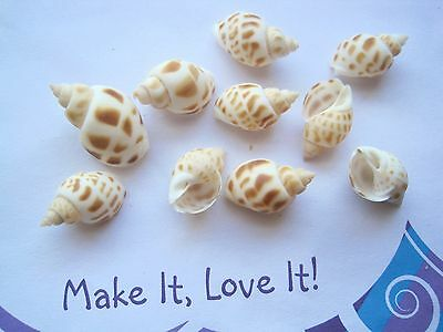 10 x NATURAL Brown White Spot TONES SEASHELLS for Craft 15mm to 22mm Sea Shells