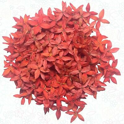 200 Pressed Flowers BIG DEAL Real Natural Organic Cute Floral DIY Creative Decor