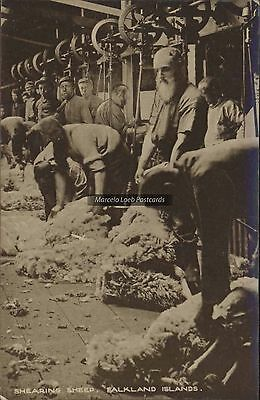 Falkland Islands Shearing Sheep Publ. By Hardy