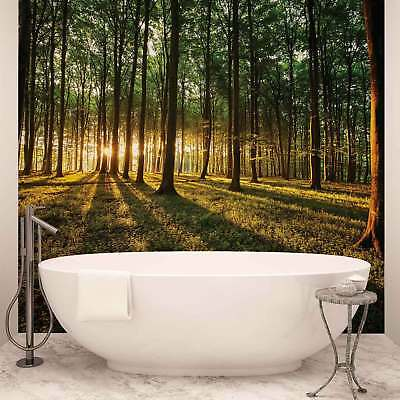 WALL MURAL PHOTO WALLPAPER XXL Forest Trees Beam Light Nature (2225WS)