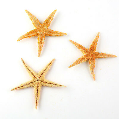 20pcs Starfish Star Beach Seaside Coastal Nautical Home Decor or Gift Yellow