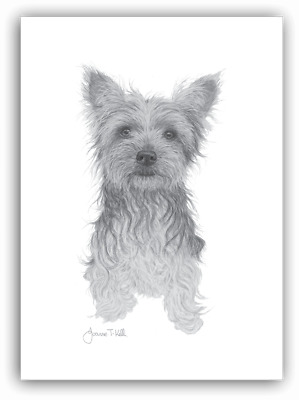 YORKSHIRE TERRIER DOG GREETINGS CARD- Print From Pencil Drawing By Joanne T Kell
