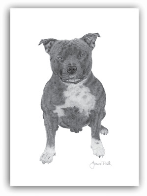 STAFFORDSHIRE BULL TERRIER /STAFFIE CARD -From Original Drawing By Joanne T Kell